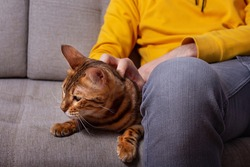 Unrecognizble caucasian young man sitting on couch with his bengal cat. Yellow and grey colors in chlothes. Amazing spotted cat with beloved owner.