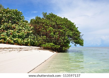 Unspoiled White Natural Beach With Mangrove And Sea Grape Trees On Woman Key, Florida Keys