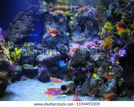 Unterwater world in Barcelona in aquarium. Holiday in spring in spain. stock photo