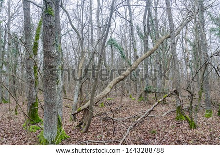 Untouched deciduous self thinning forest in a swedish nature reserve on the island Oland