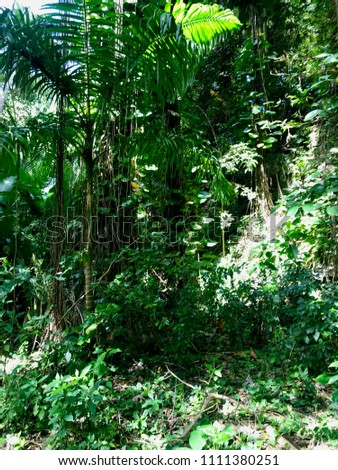Untouched lush nature at a gully in the Saint Thomas Parish of Barbados (Caribbean Island of the West Indies) #1111380251