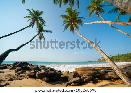 Untouched tropical beach in Sri Lanka