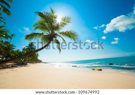 Untouched tropical beach in Sri Lanka #109674992