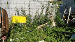 unused cart and yellow sign in the bushes