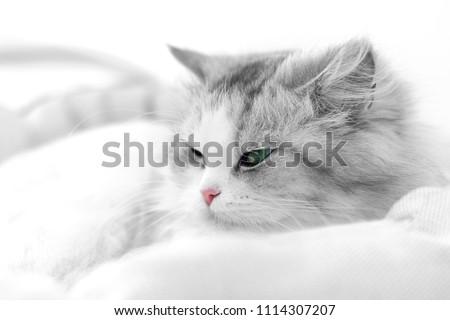 Unusual black and white cat portrait. Shallow DOF