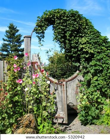 Unusual circular wooden garden gate with hollyhock flowers.