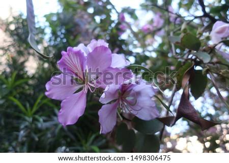 Unusual flower of unusual color