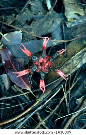 Unusual Hawaiian venus fly-trap like flower.
