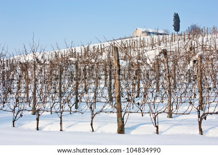 Unusual image of a wineyard in Tuscany (Italy) during winter time