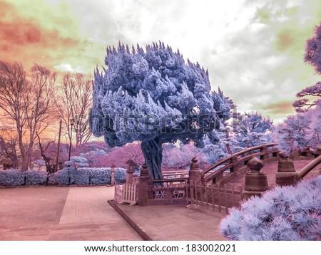 Unusual Japanese tree, extended Infrared photograph. Kamakura, Japan.
