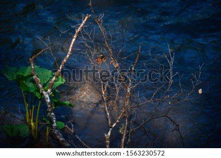 unusual light falling on a branch above the water. a small amount of light makes the picture mysterious and mysterious