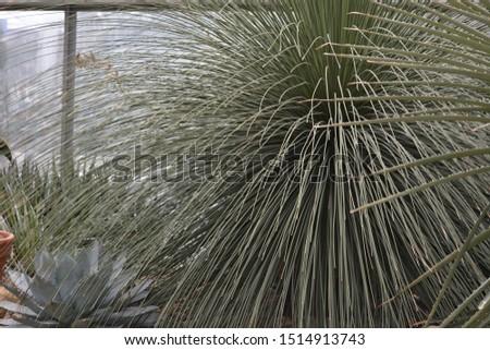 unusual plant and unusual leaves
