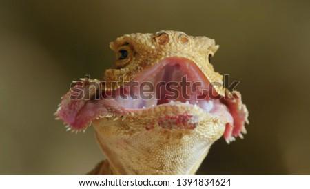 Unusual sand lizard unusual background