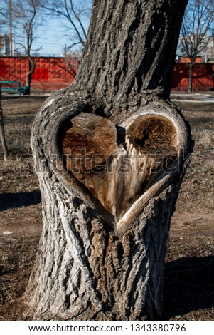 Unusual tree with a heart