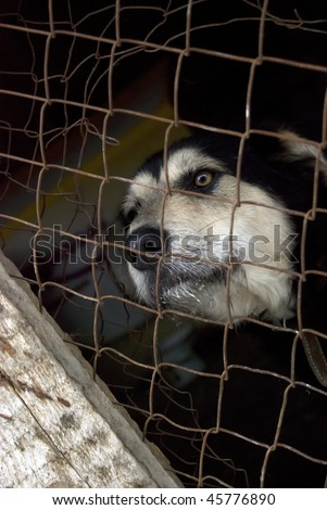 Unwanted dog in cage