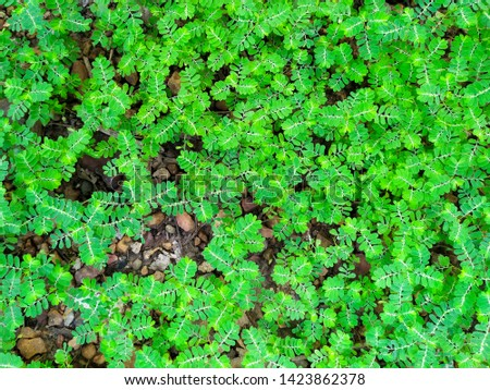 Unwanted flora closeup, Nature background #1423862378