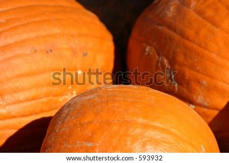 Up Close - Pumpkins