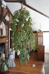 Up side down, Christmas tree, hanging from the ceiling with rope, with simple rural decorations, Bavarian style restaurant, Eastern Shore Winter Festival, Nova Scotia, Canada
