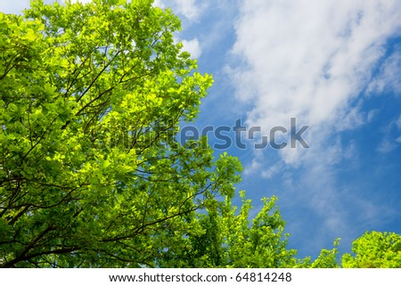 Up view on tree and clouds  on blue sky #64814248