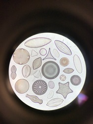 Upclose in a Microscope Lens