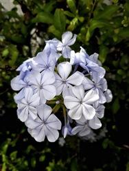 Upclose of flowers. Flowers macro photo.