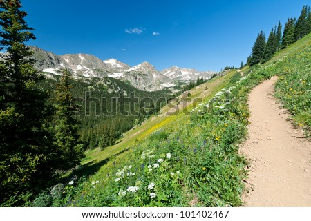 Uphill trail climbs through a field of wildflowers in Colorado