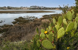 Upper back bay ecological reserve Newport Beach California on a sunny day
