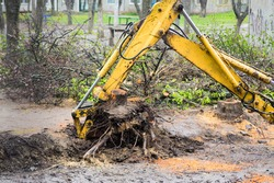 uprooted tree from the ground, uprooting the stumps, tree removal