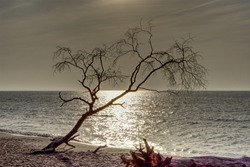 Upset Trees, Sunsets and Landscape at the Beach of Baltic Sea