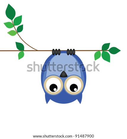 Upside down owl on a branch looking down