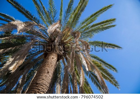 Upward shot of palm tree desert coconut tropical beach summer blue sky medium left side