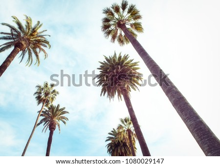 upward view of palm trees against blue sky #1080029147