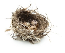 Urban birds nest with three eggs inside, isolated on white.