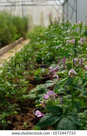 Urban Farming / Organic Farming for safe food