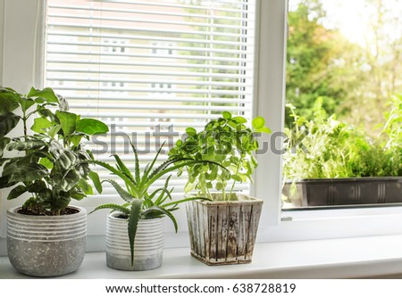 urban gardening #638728819