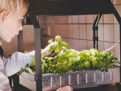 urban gardening and urban farming start growing with hydroponics -kid of child harvesting fresh home grown herbs and greens
