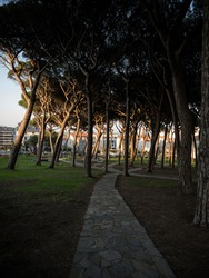 Urban pine tree park Parque Los Pinares with walkway path trail in city of Santander Cantabria, Spain Europe