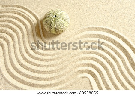 urchin in sand with line