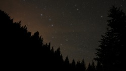 Ursa Major constellation seen above a coniferous forest in the night sky. Star watching can be a beautiful outdoor activity while camping.