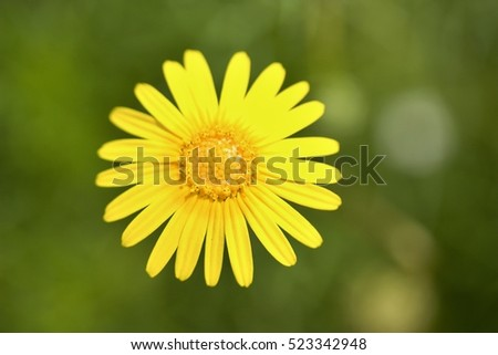 Free photos orange flower with long thin petals and yellow center ursinia nana flower 523342948 mightylinksfo