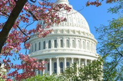US Capitol Building in springtime - Washington DC, United States of America