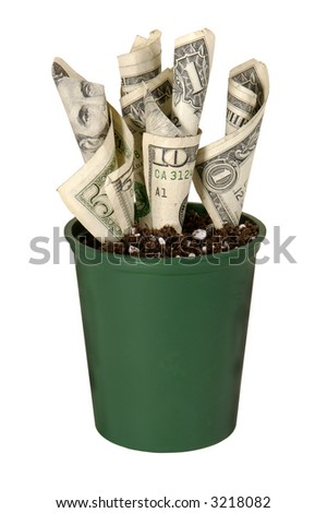 US currency growing in a pot of soil on white background