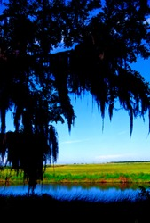USA, Louisiana, Cameron Parish, Creole Nature Trail, National Scenic Byway, Sabine National Wildlife Refuge, Louisiana Outback