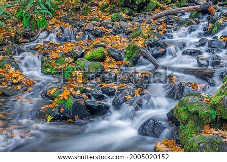 USA, Oregon. Columbia River Gorge National Scenic Area, Starvation Creek State Park, Starvation Creek in autumn with fallen maple leaves, dark volcanic rocks moss and ferns. Stock photo ©