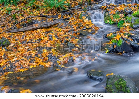 USA, Oregon. Columbia River Gorge National Scenic Area, Starvation Creek State Park, Starvation Creek in autumn with fallen maple leaves, dark volcanic rocks, moss and ferns. Stock photo ©