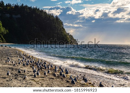 USA, Washington State, Post Townsend. Fort Worden State Park, flock of seagulls on the beach Stockfoto ©