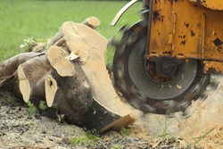 Using a Stump Grinder to remove fallen tree