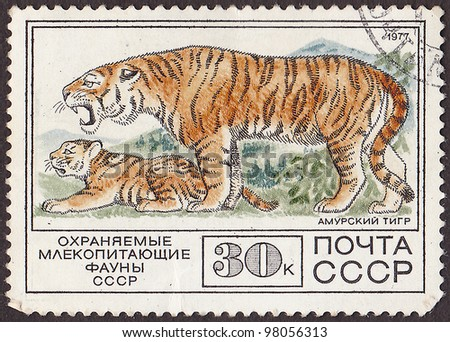 """USSR - CIRCA 1977: A post stamp printed in USSR shows white siberian tigers, with the inscription in Russian """"protected mammal of  USSR fauna"""". circa 1977"""
