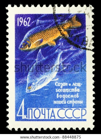 USSR - CIRCA 1962: A stamp printed in Russia shows carp and bream, series Fish preservation in USSR., circa 1962