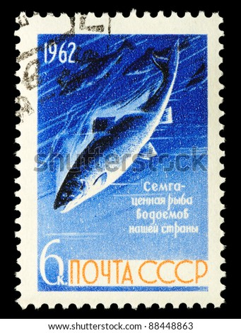 USSR - CIRCA 1962: A stamp printed in Russia shows salmon, series Fish preservation in USSR., circa 1962